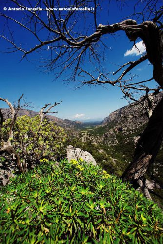 Dorgali - Valle di Lanaitto